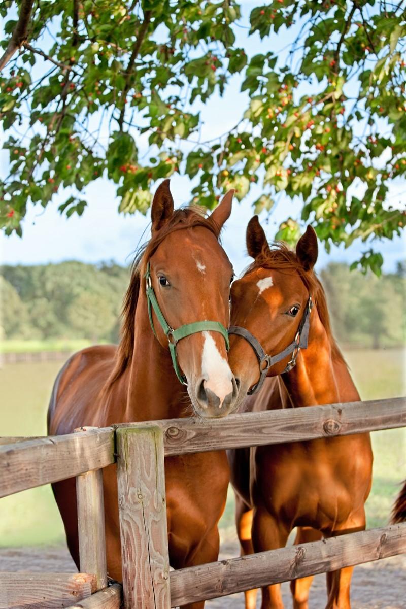 Registratie locatie paarden verplicht vanaf 21 april