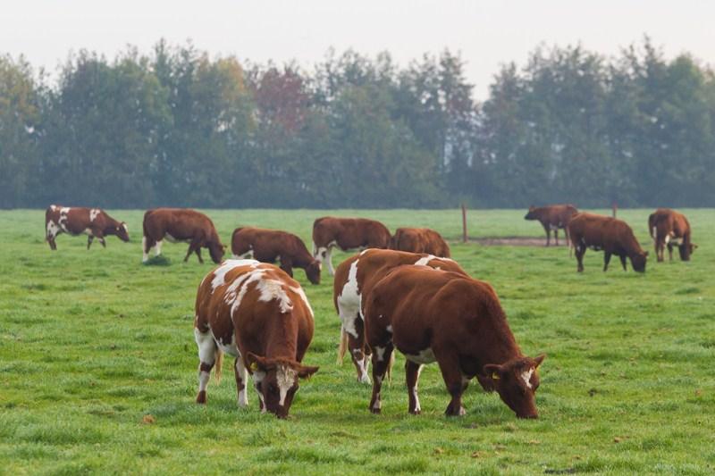 Vrijstellingsregeling bovengronds aanwenden runderdrijfmest