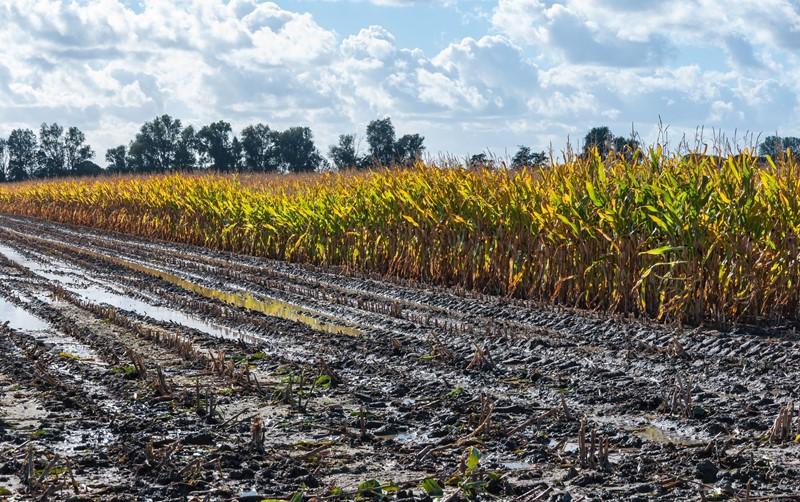 Te lang drasplas kost landbouwer geld