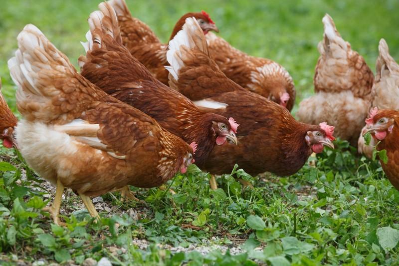 Omschakelprogramma duurzame landbouw