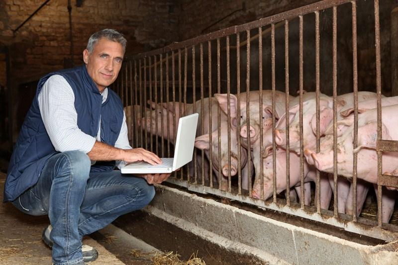 Iedere varkenshouder betaalt mee aan onderzoek